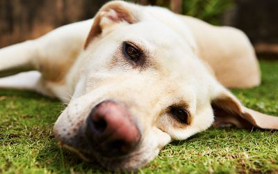 Helping Dogs with Separation Anxiety