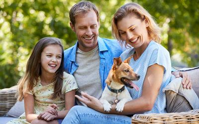 What are the Habits of a Responsible Dog Owner?