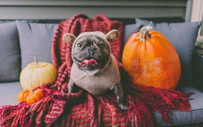 Pet Tips for Halloween