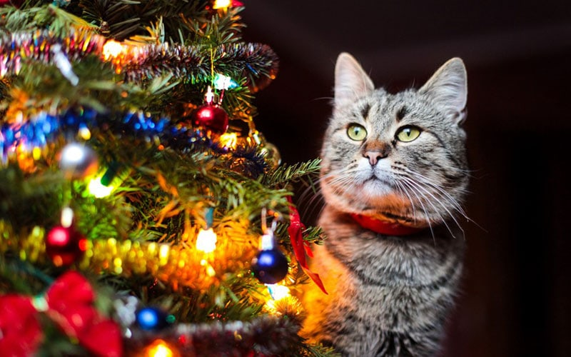 How Can I Keep My Pet Safe and Happy During the Holidays?