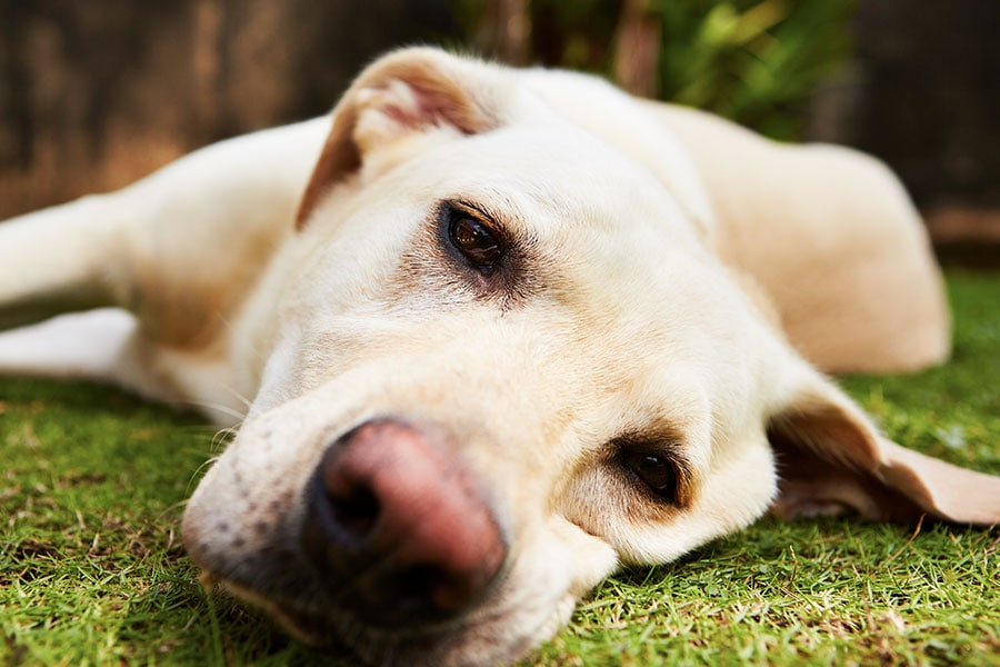 Warning Signs and What to do About Pet Anxiety