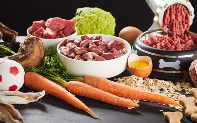 What is the Raw Diet and How Does it Work?