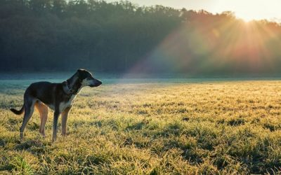 How to Prevent Fleas, Ticks and Heartworm in Dogs