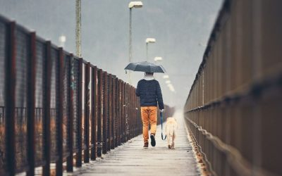 Rainy Day Essentials For Your Dog in Chesterton & Valparaiso