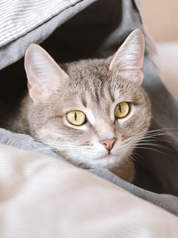 Cat Sitting in Valparaiso and Chesterton