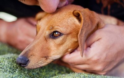 Why You Should Microchip Your Pets in Chesterton & Valparaiso