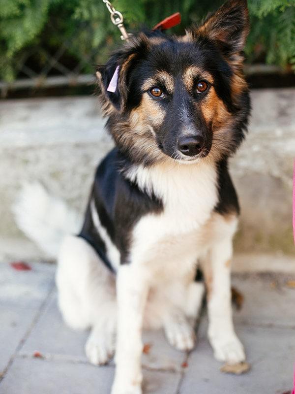 Puppy Walking Valparaiso Chesterton