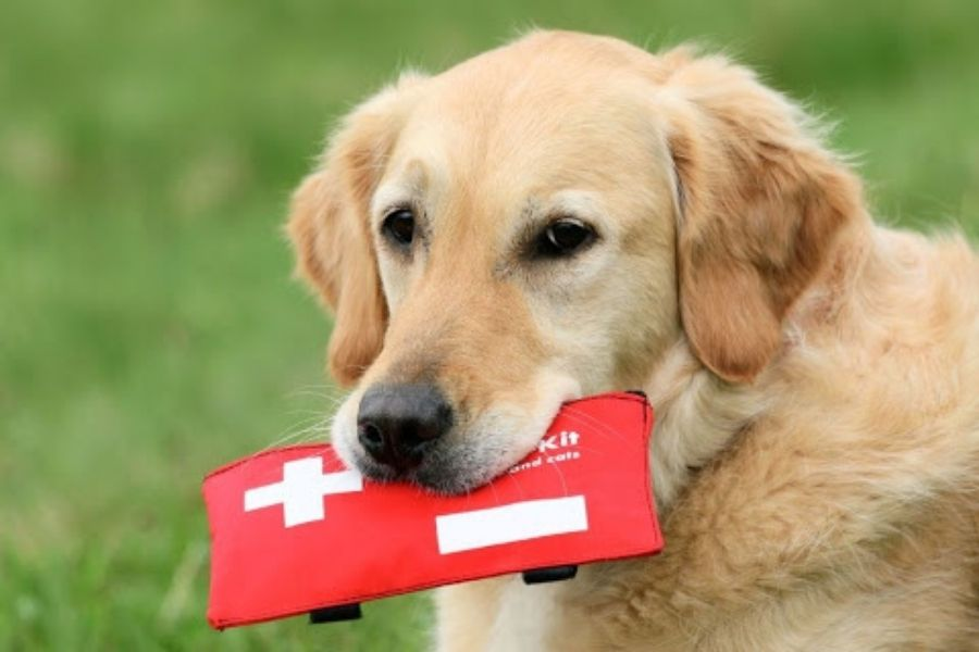 You Hire a CPR and First Aid Certified Dog Walker