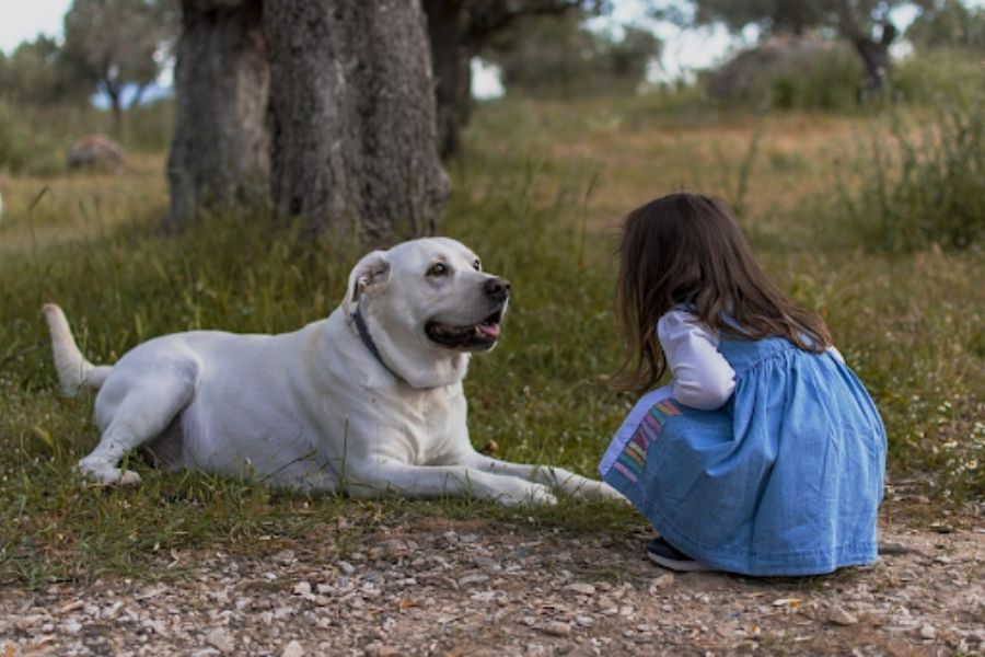 Dog calm and well-rested with child after dog walker visit