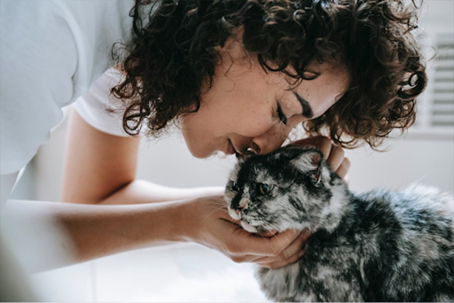 Hire the Best Cat Sitter Service in Valparaiso and Chesterton
