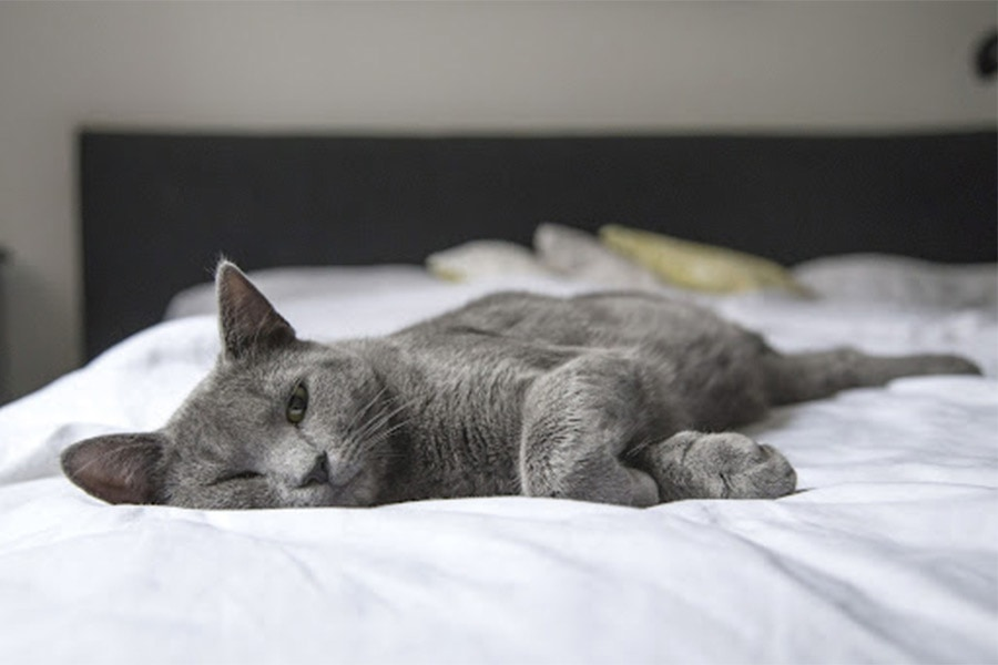 How Long Can I Leave My Cat with a Pet Sitting Service?